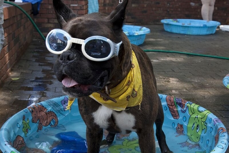 how to keep pets cool in the summer heat
