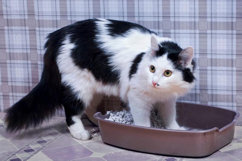 cat litter box issues